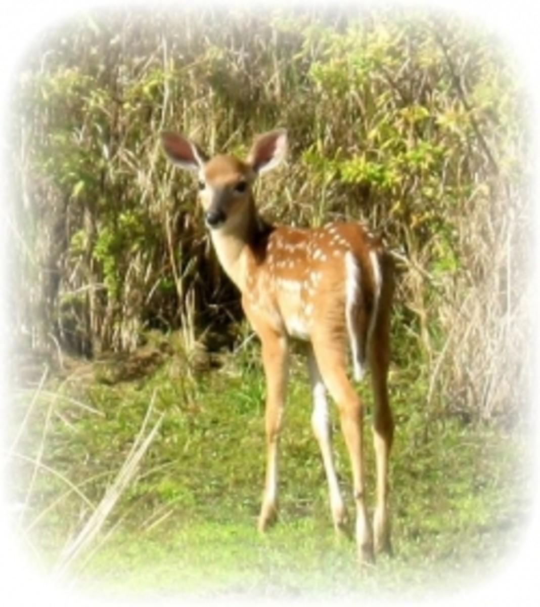 Florida Wildlife on the Golf Course