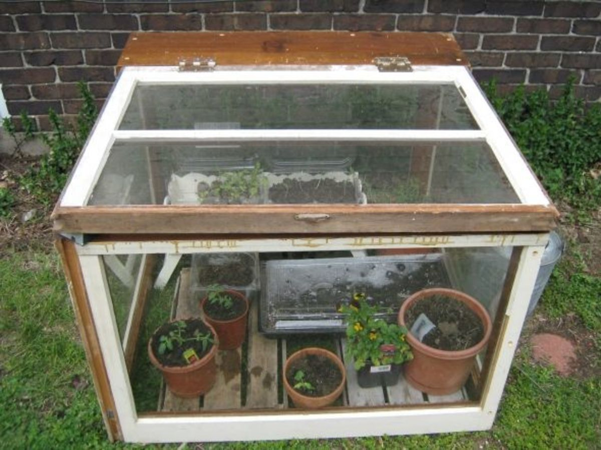Small Upcycled Greenhouse