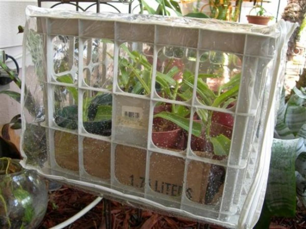 Hanging Comfortor Bag Greenhouse