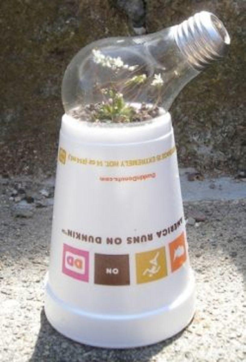 Lightbulb Greenhouse