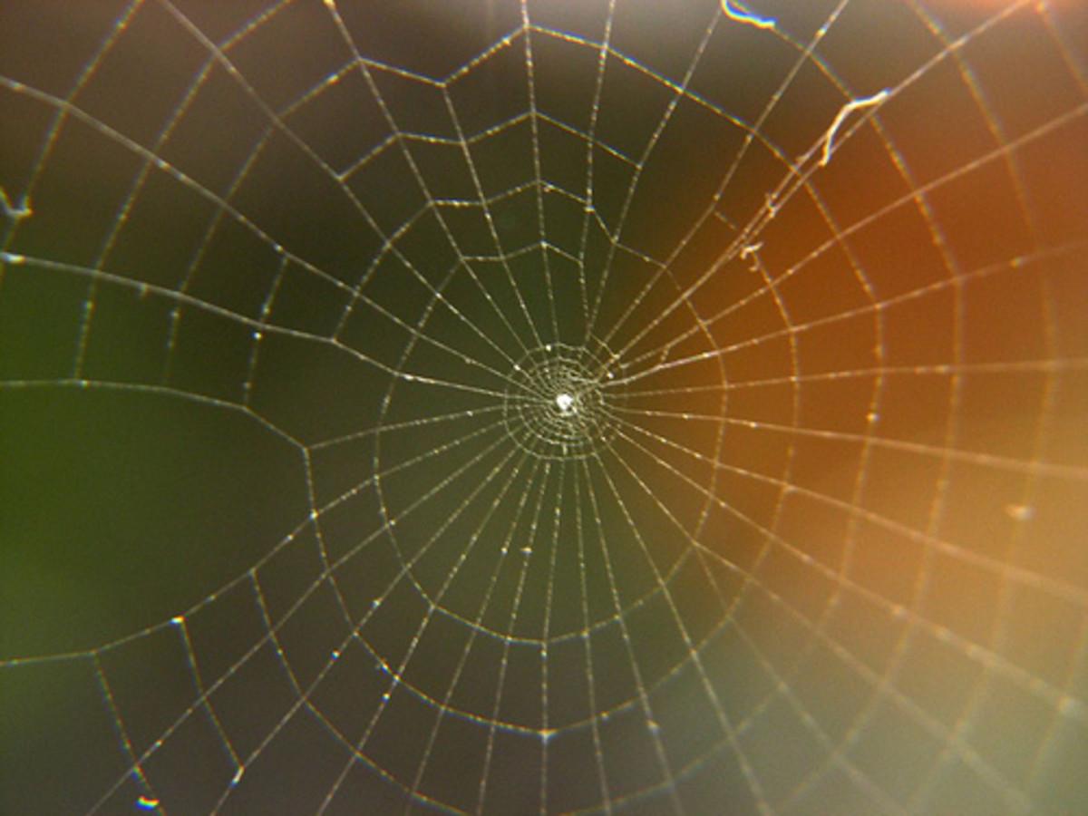 spiral spiderweb