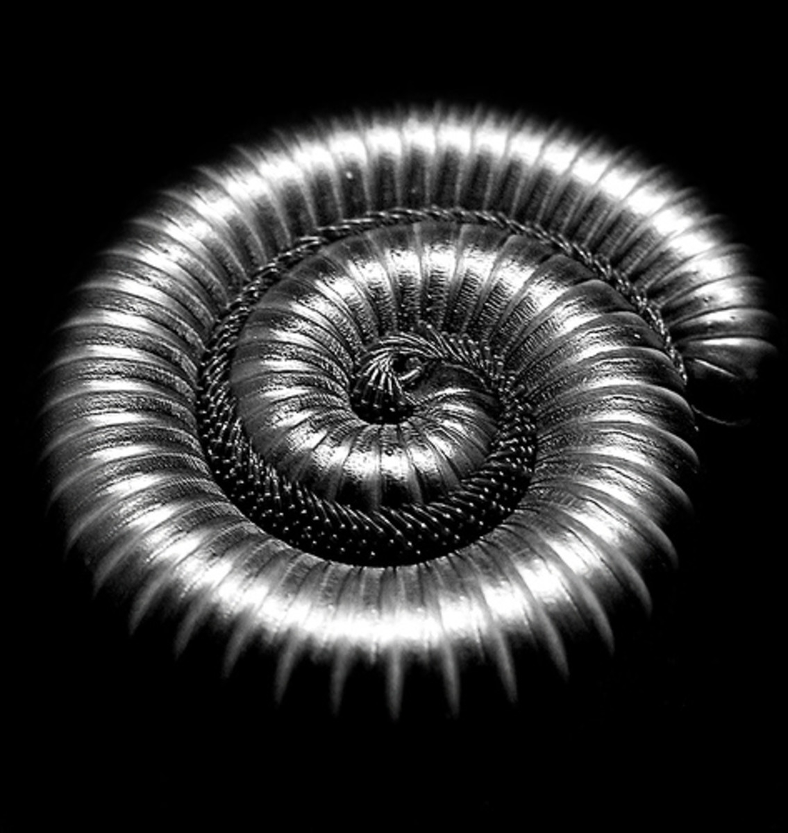Spiral shape in nature