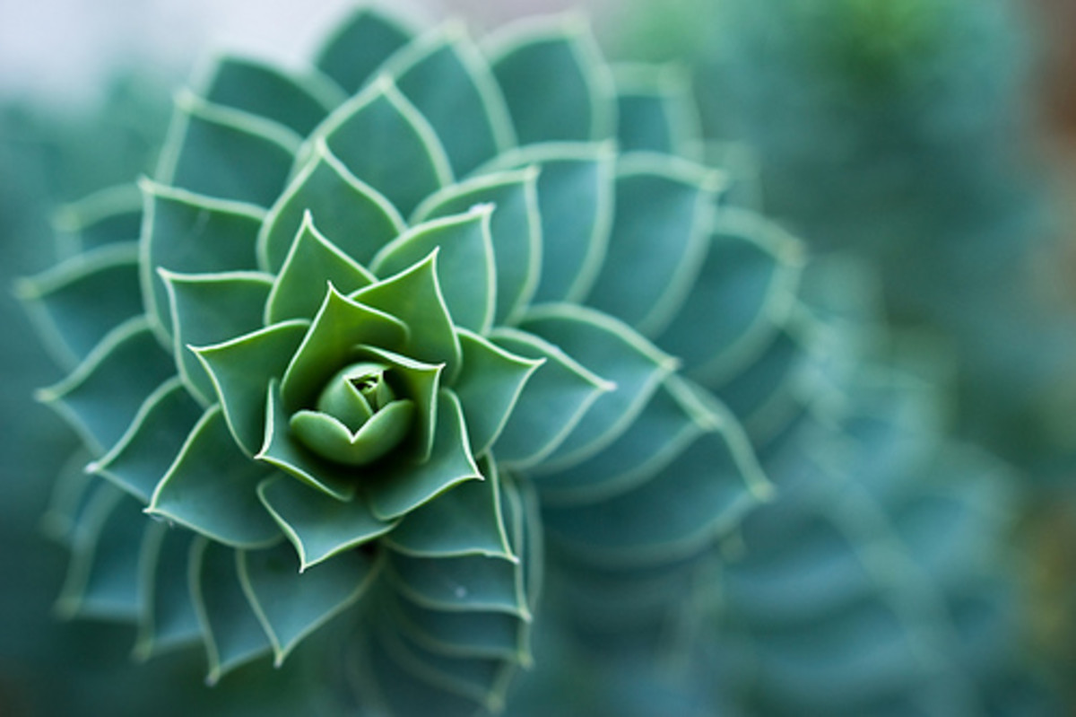 Spiral shapes in leaves