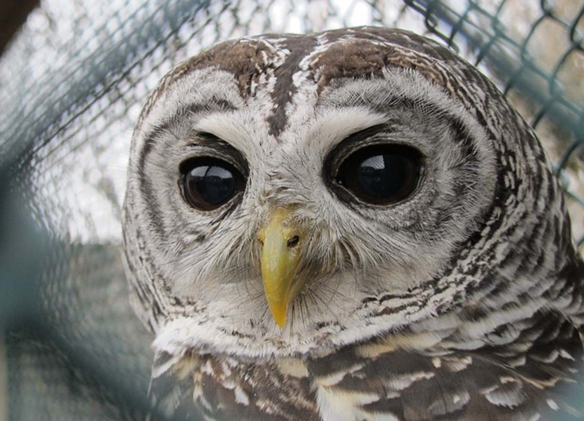 Are you allergic to owls? That might make an interesting topic for a Hub.