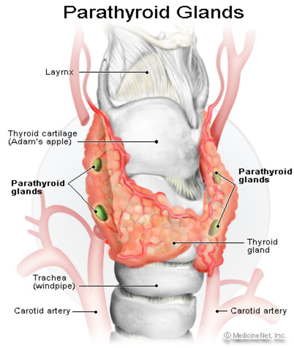 My Account Of Hyperparathyroidism And Parathyroid Surgery Part 1