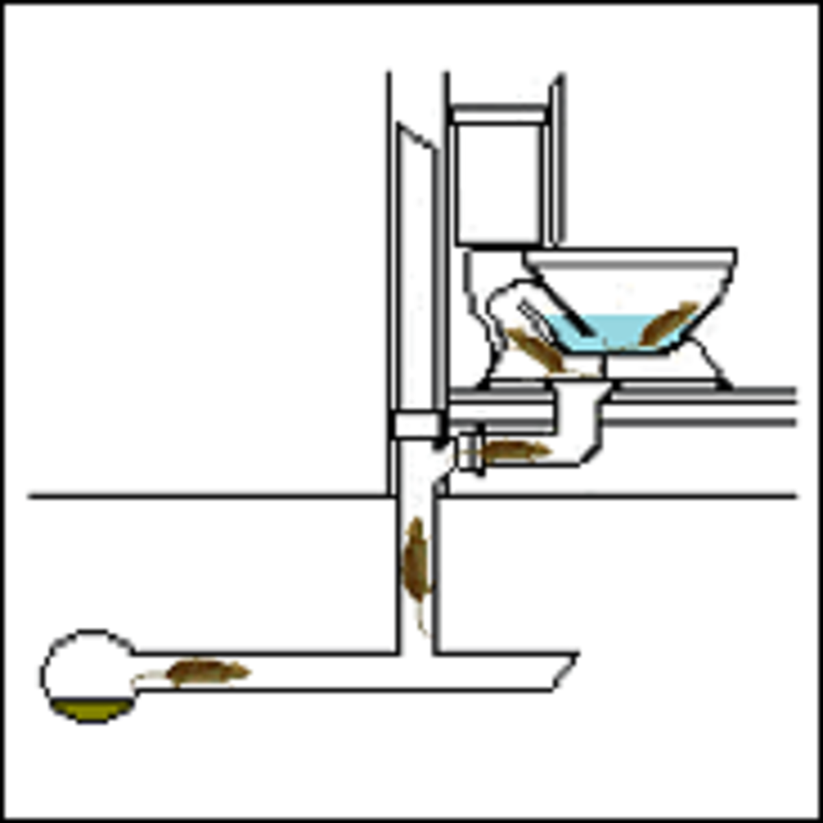 An illustration of how a rat gets into the toilet