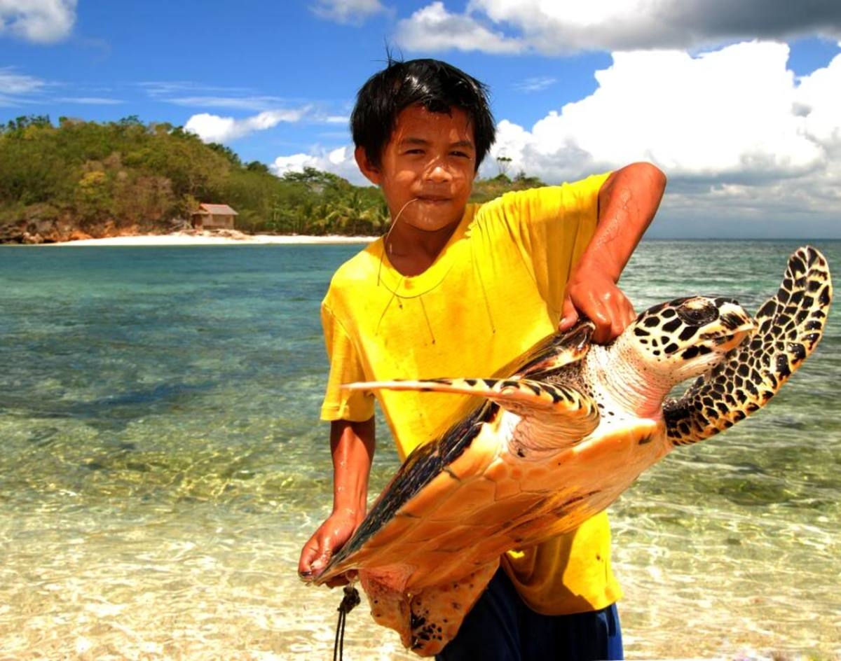 The Philippine Turtle or the Pawikan Photo from flickr.com