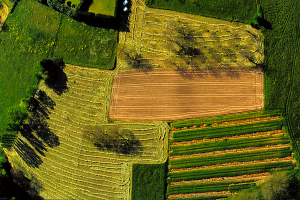 Aerial view of polyculture fields