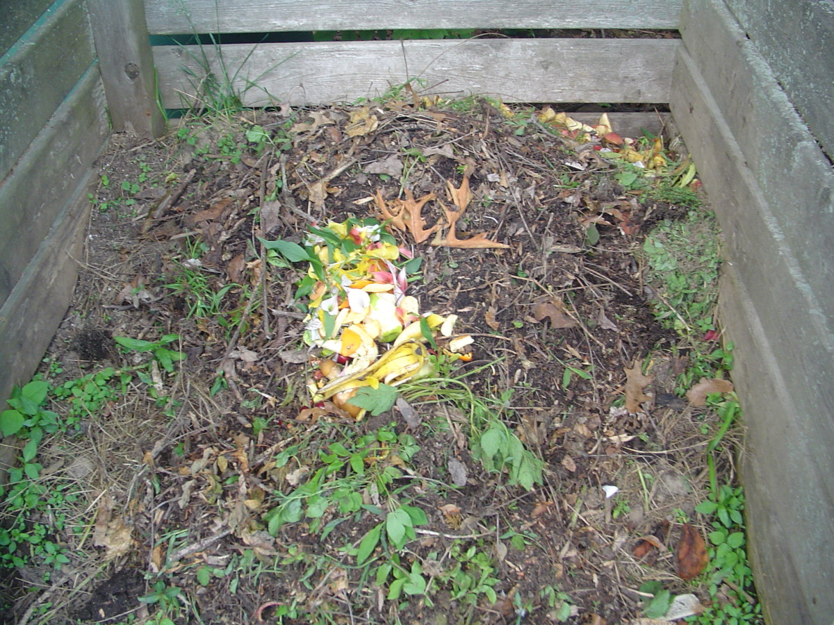 In stage 1, kitchen scraps and garden waste is still recognizeable. It is added to the compost pile