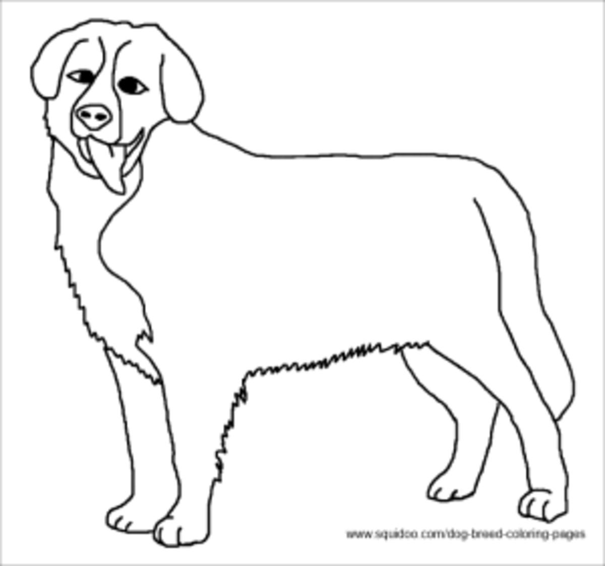 Bernese Mountain Dog coloring sheet