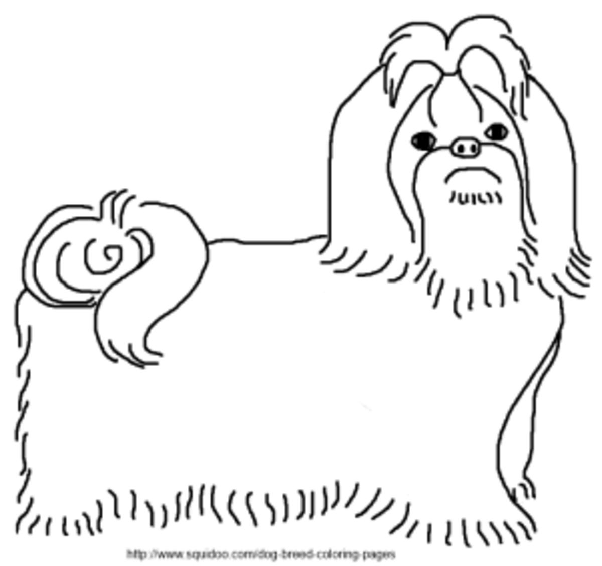 Shih Tzu Coloring Page