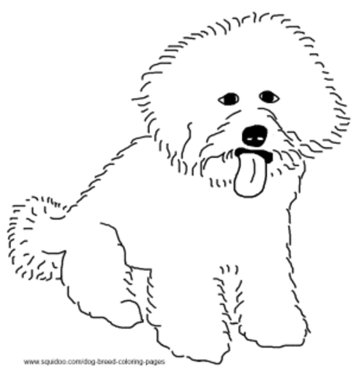 Bichon Frise coloring page