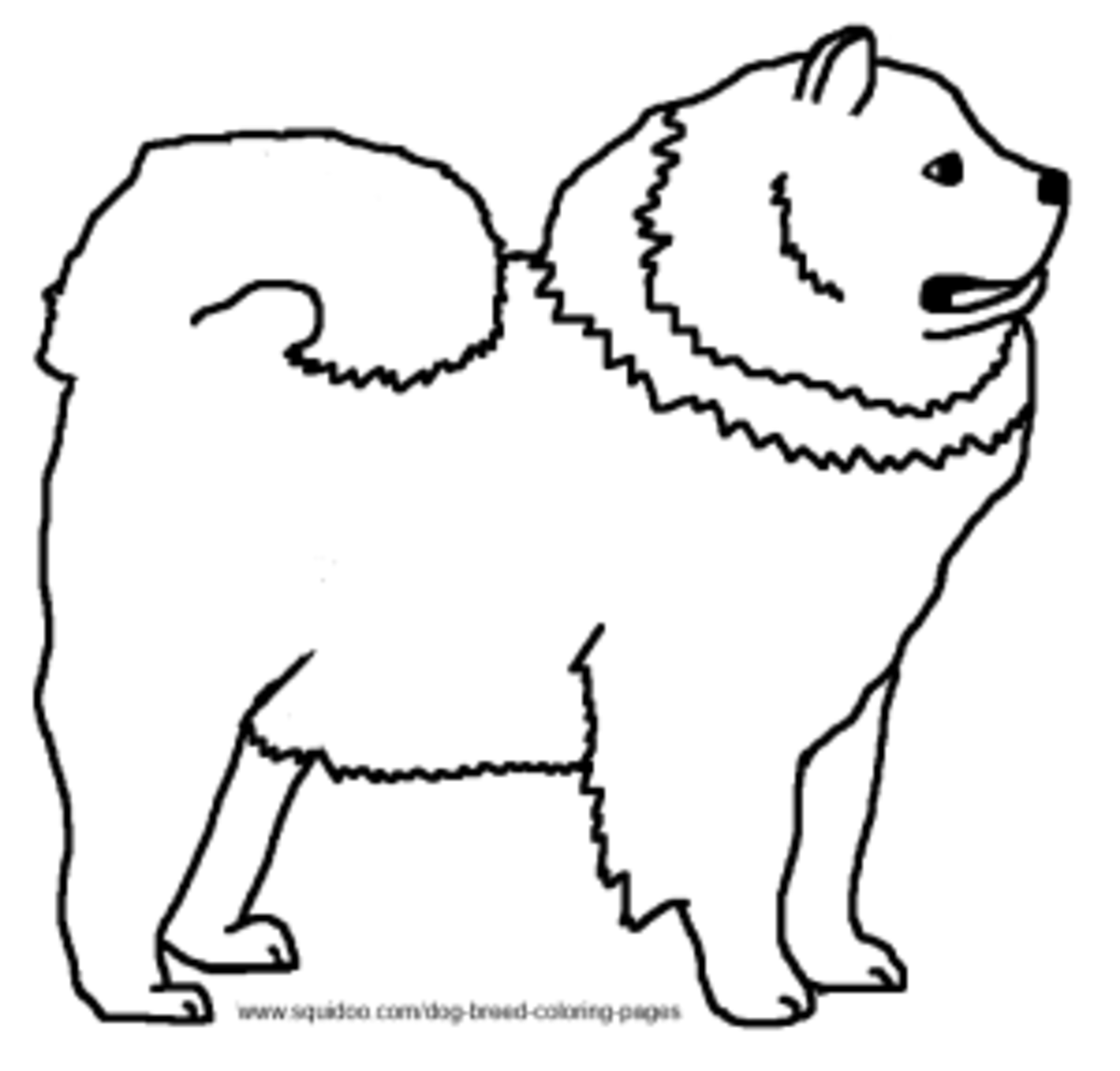 chow chow coloring page