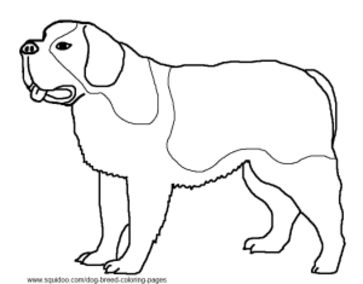 Dog Breed Coloring Pages St Bernard Coloring Pages