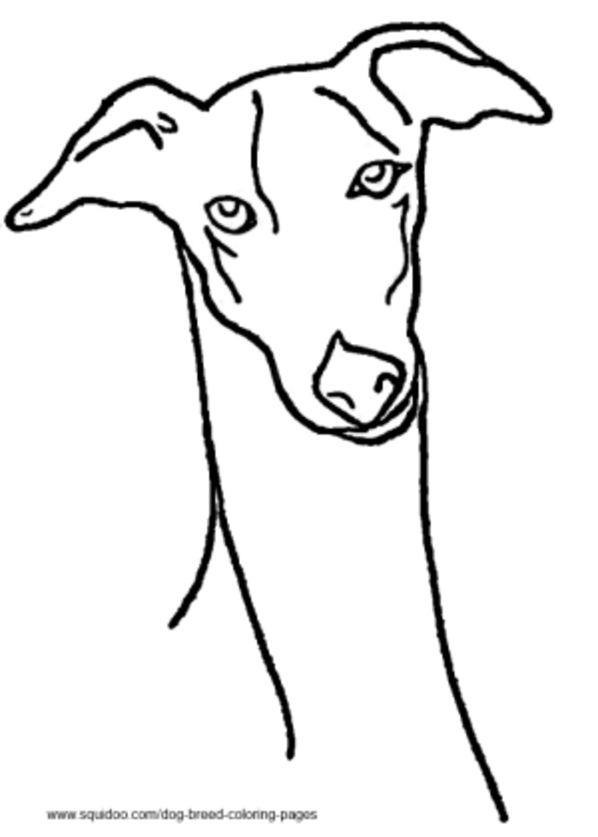 Greyhound coloring page