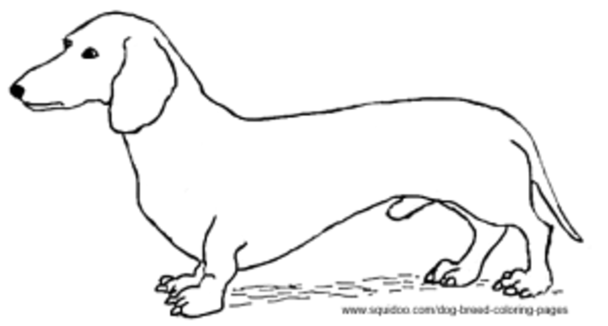 dog breed coloring pages hubpages
