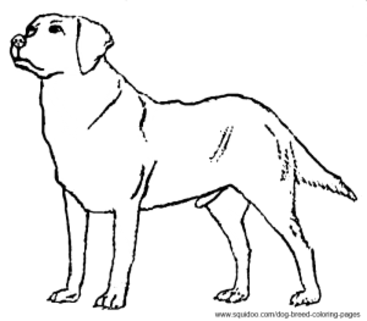 lab puppies coloring pages - photo#24