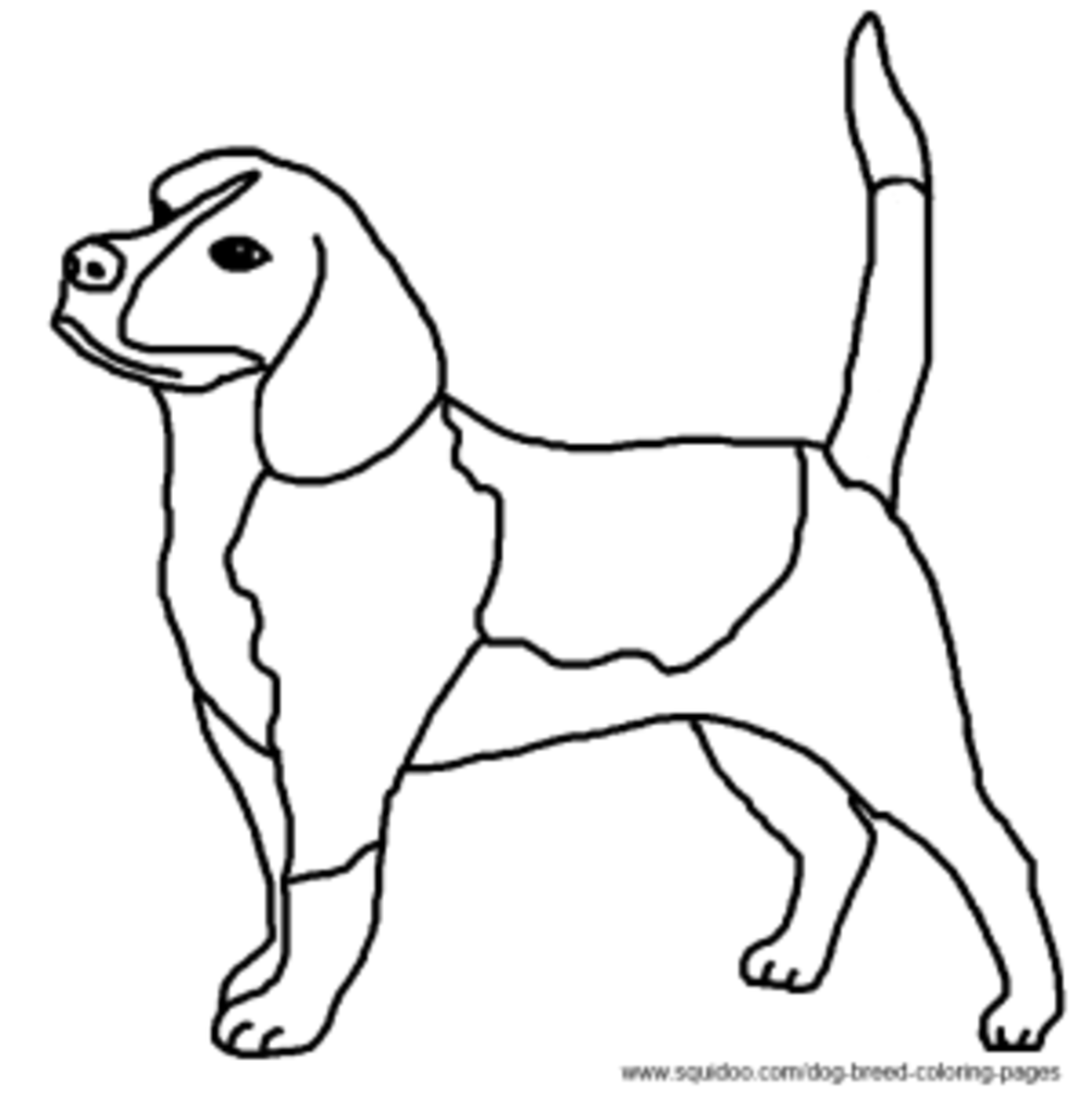 beagle coloring picture