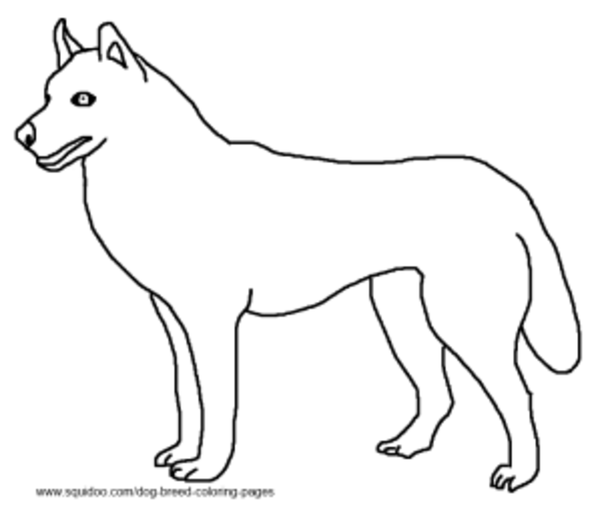 Dog breed coloring pages hubpages for Husky puppy coloring pages
