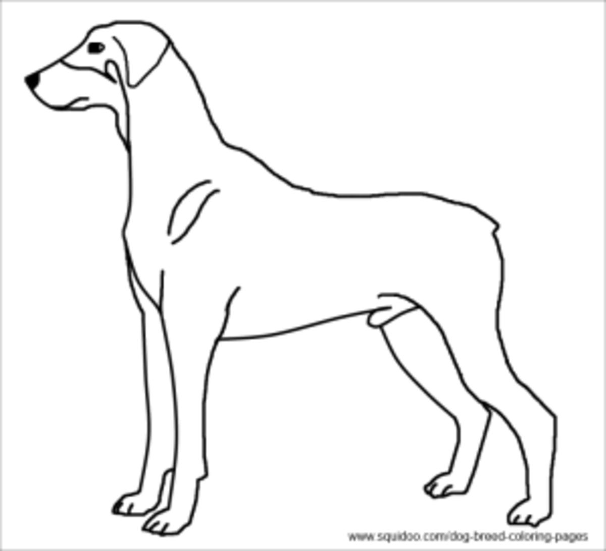 doberman pinscher coloring sheet