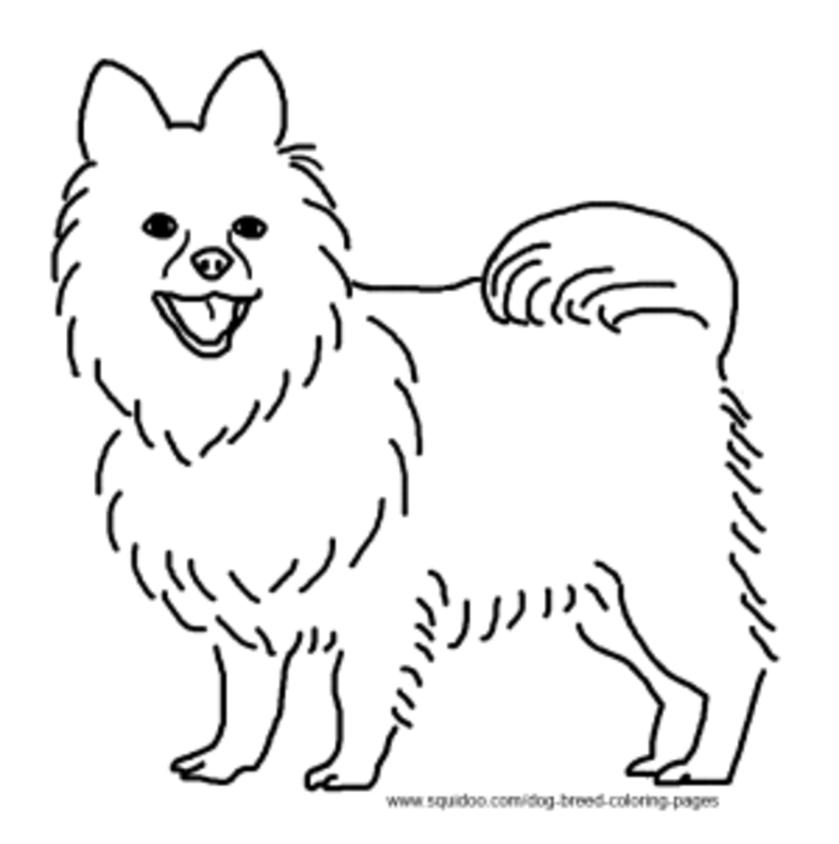 pomeranian coloring pages free - photo#17