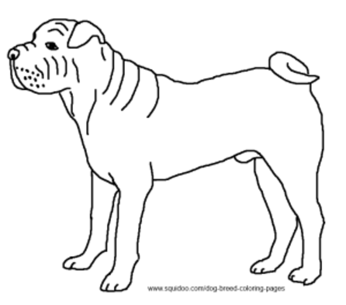 shar pei coloring pages