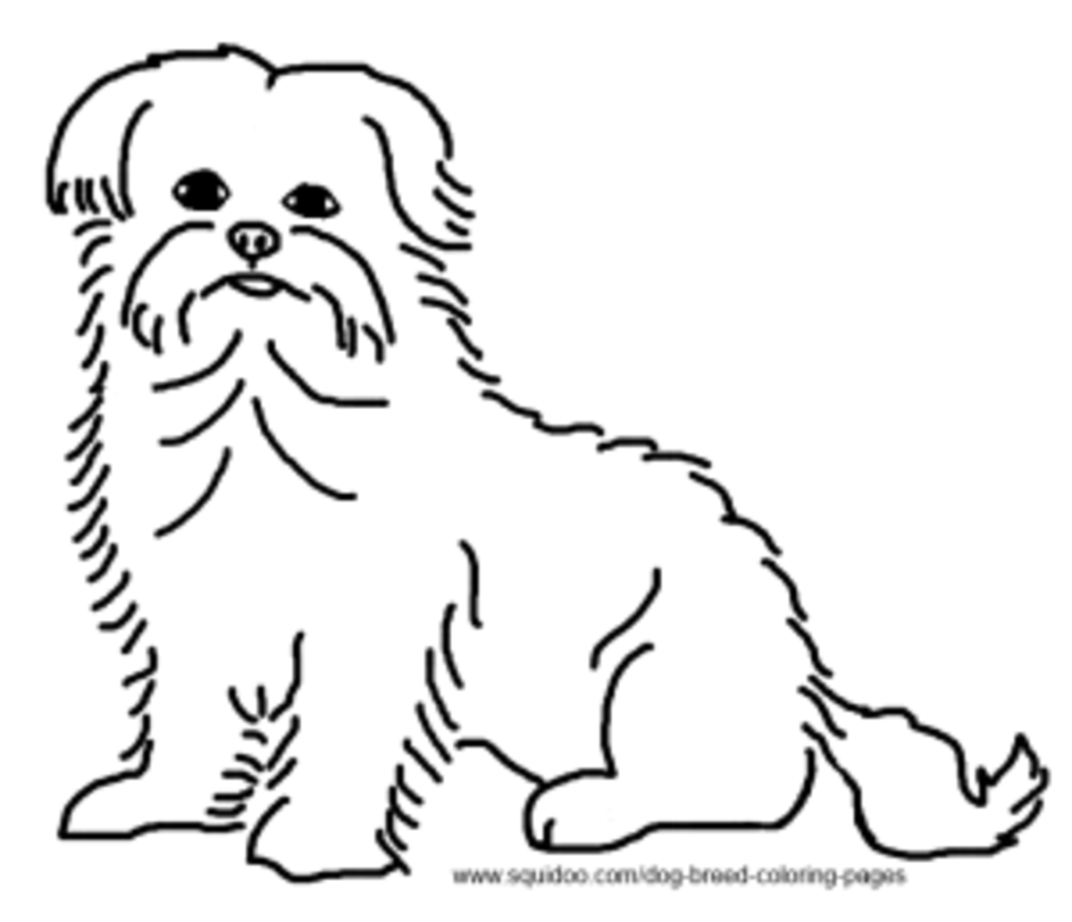 Maltese Terrier Coloring Page