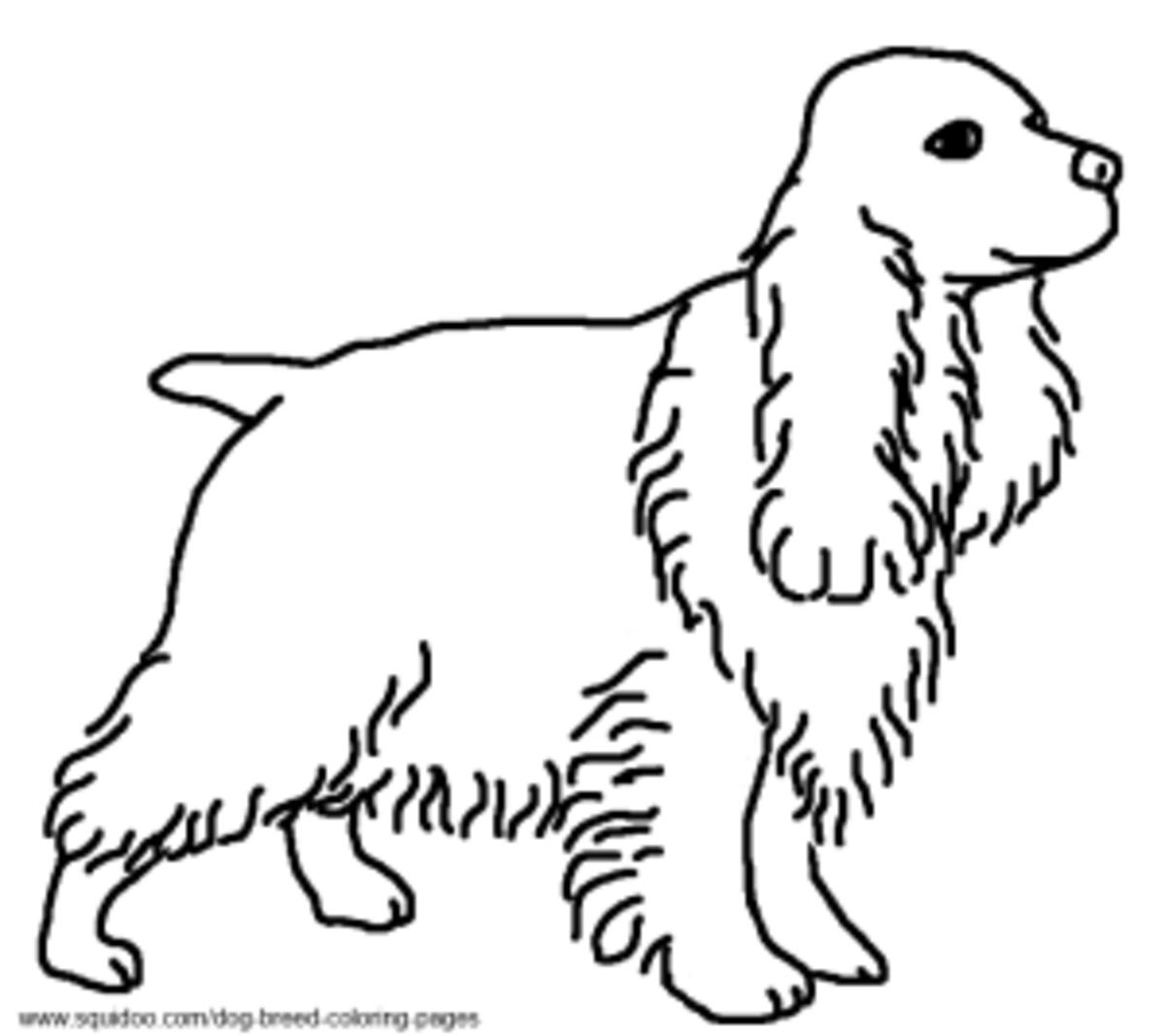 Cocker Spaniel coloring page