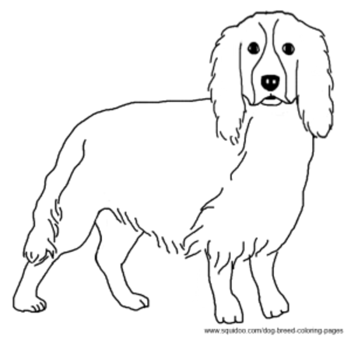 childrens coloring pages springer spaniel | Dog Breed Coloring Pages | HubPages