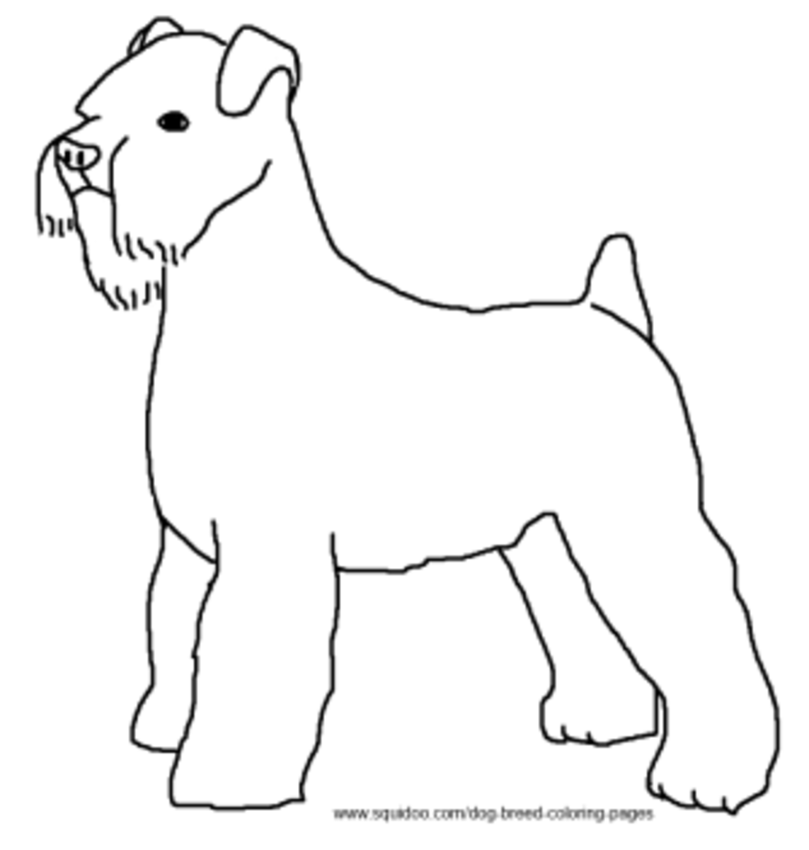 Schnauzer coloring pages