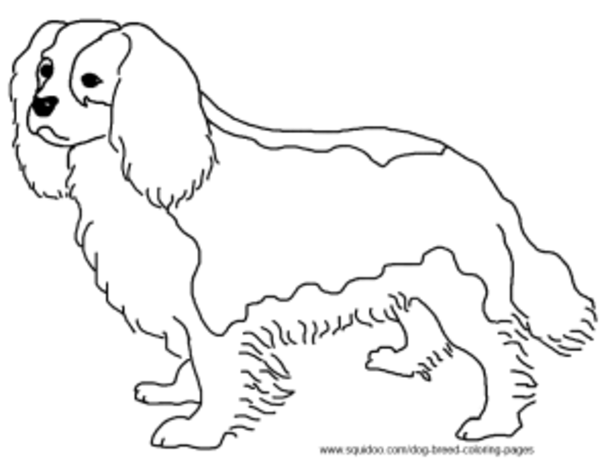 Cavalier King Charles Spaniel coloring sheet
