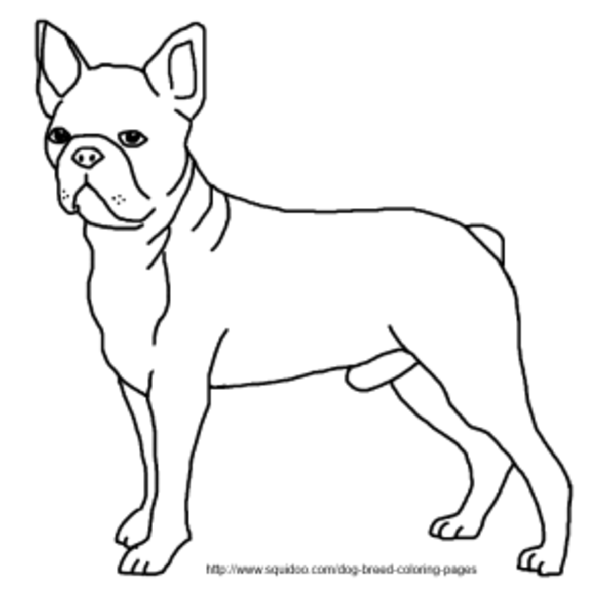 boston terrier coloring page image boston terrier coloring page dog breeds picture Barbie Coloring Pages Printable  Boston Terrier Coloring Pages Printable