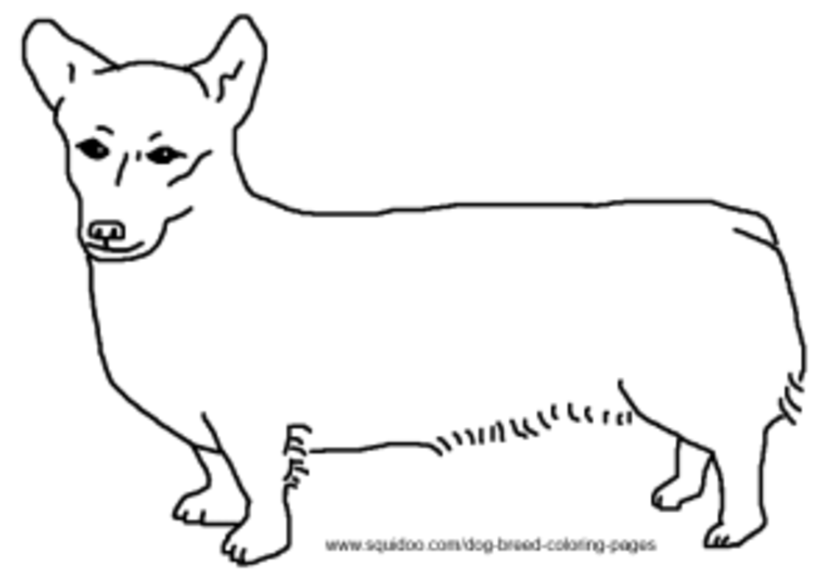 coloring pages of corgis - dog breed coloring pages hubpages