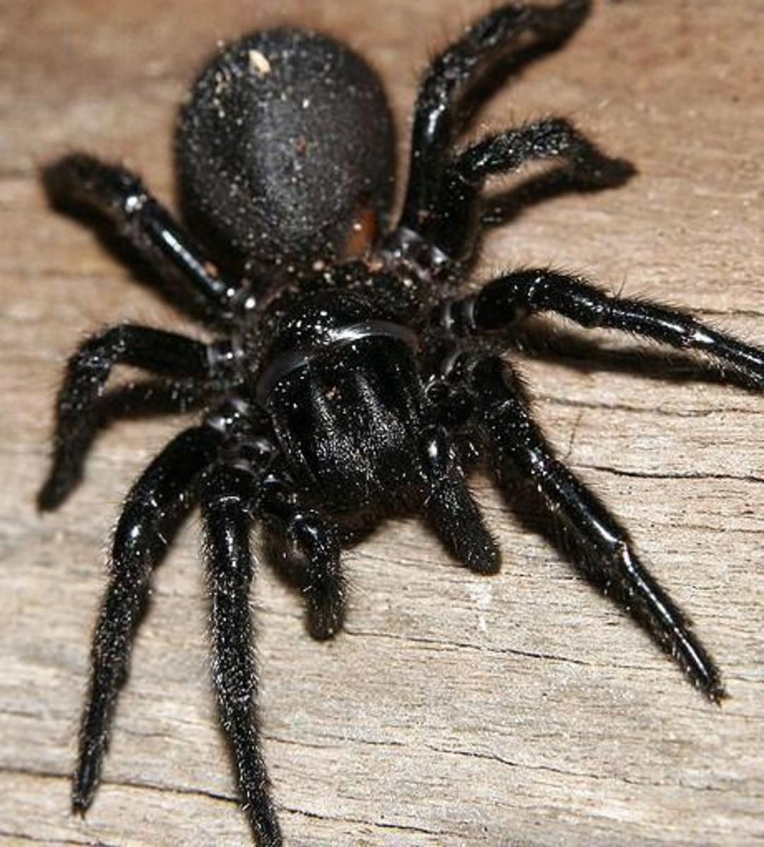 The spider belongs to the arthropod family, the most successful of the animal phyla