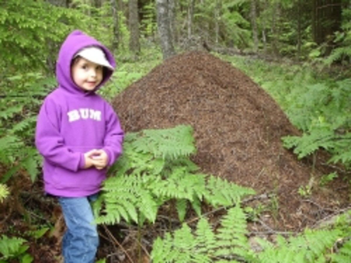 Giant Ant Hill Photo credit: Sheila Murray-Nellis. All rights reserved.