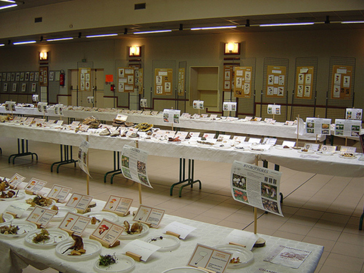 Many towns in France hold funghi exhibitions where collections are made, identified and labelled. This one was held at Montbron, about half an hour from Videix
