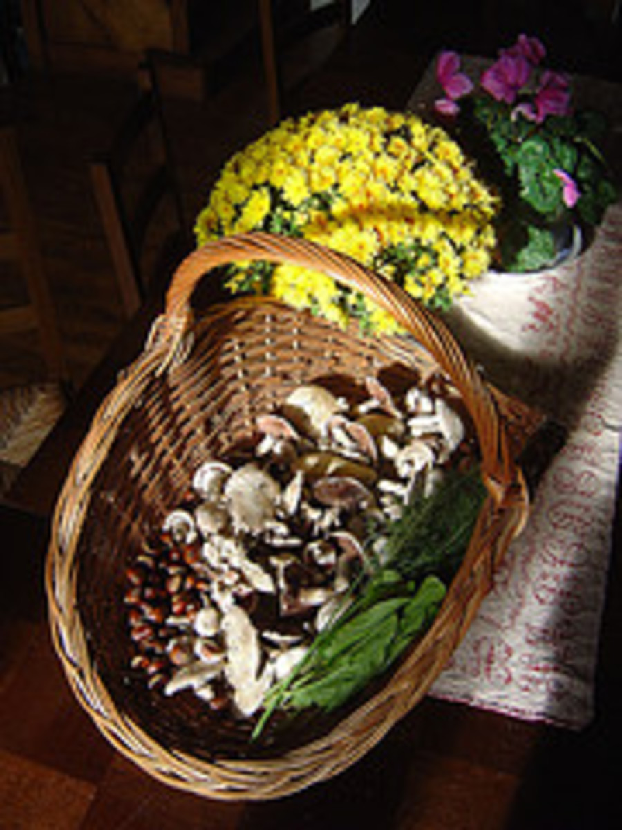 Autumn is rich in the wild food harvest.