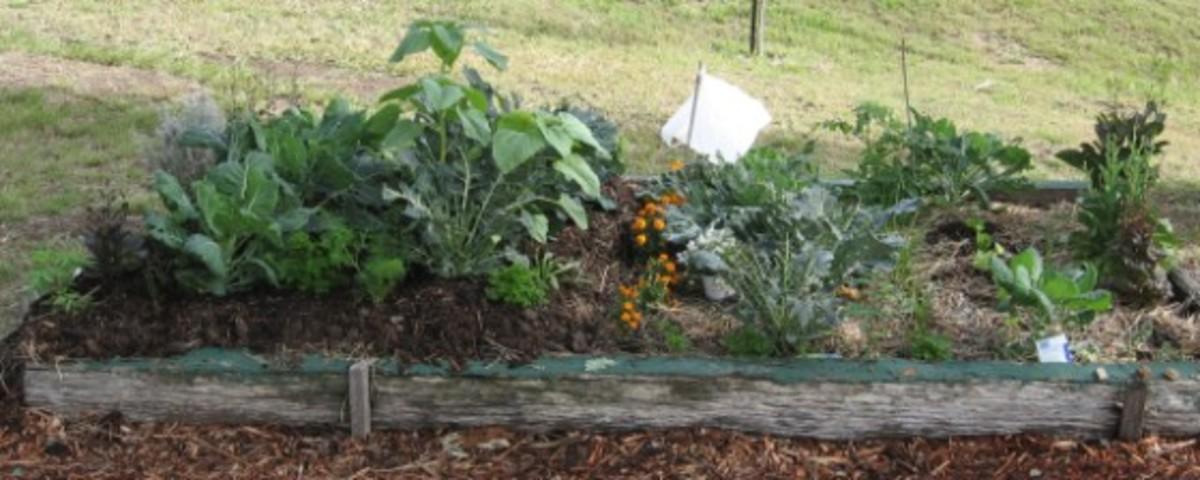 No dig garden soil experiment