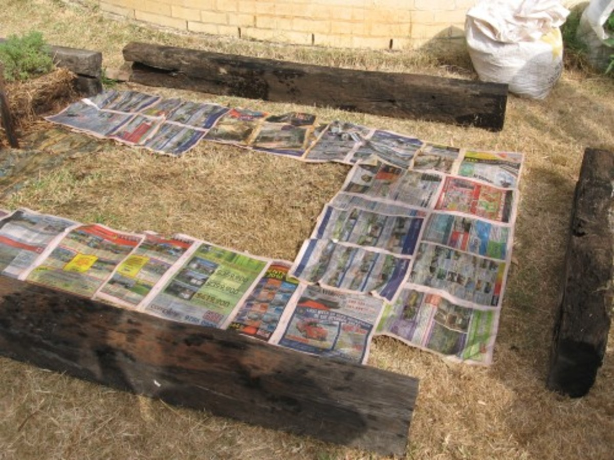 Lay newspaper in no dig garden