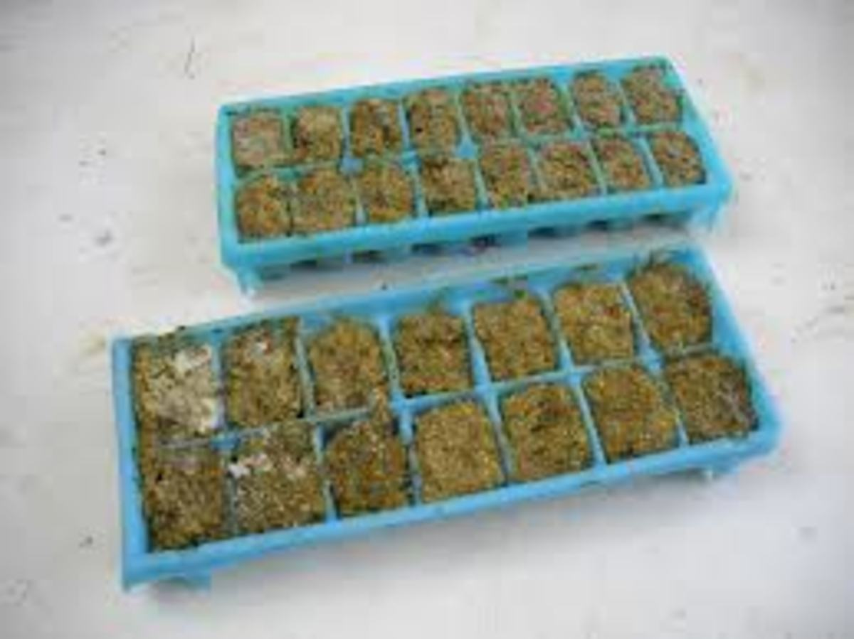 Freeze Your Homemade Pesto In Ice Trays For Later Use