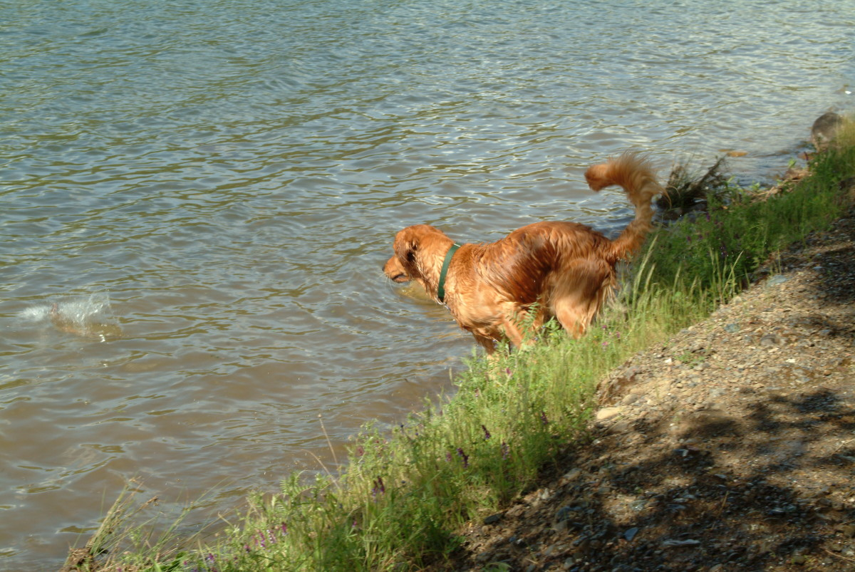 To prevent unecessary injuries, your dog needs a few practice runs before the season begins.