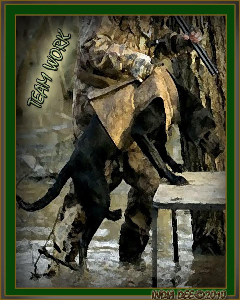 Hunter and dog TEAM WORK