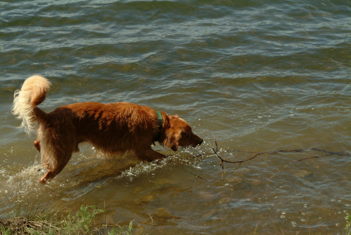Remind your hunting dog that water is a blast!