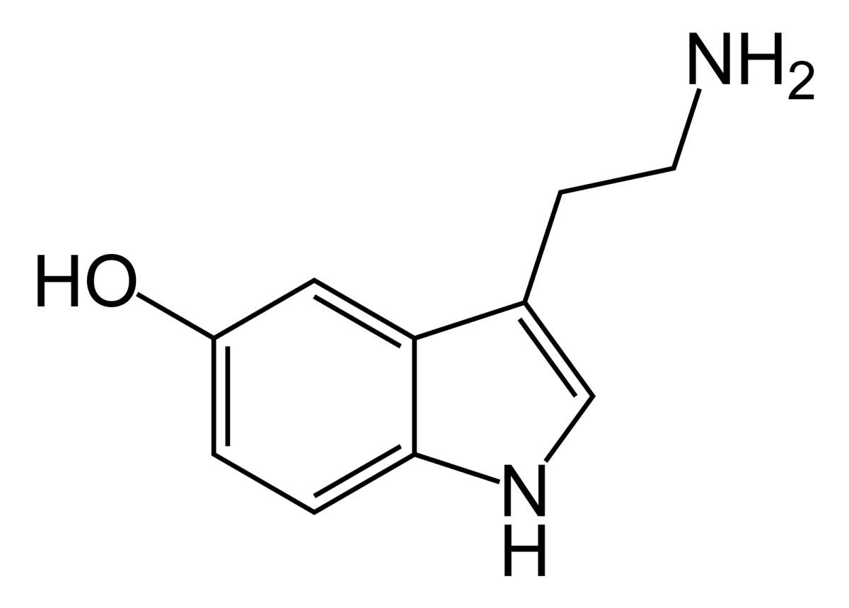 In Pursuit of Happiness (Serotonin Molecule) - Socks - HUMAN