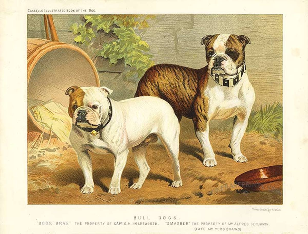 "This original antique print is from the renowned ""The Book of The Dog"". Published in London in 1881 by Cassells. Image courtesy of Wiki Commons"