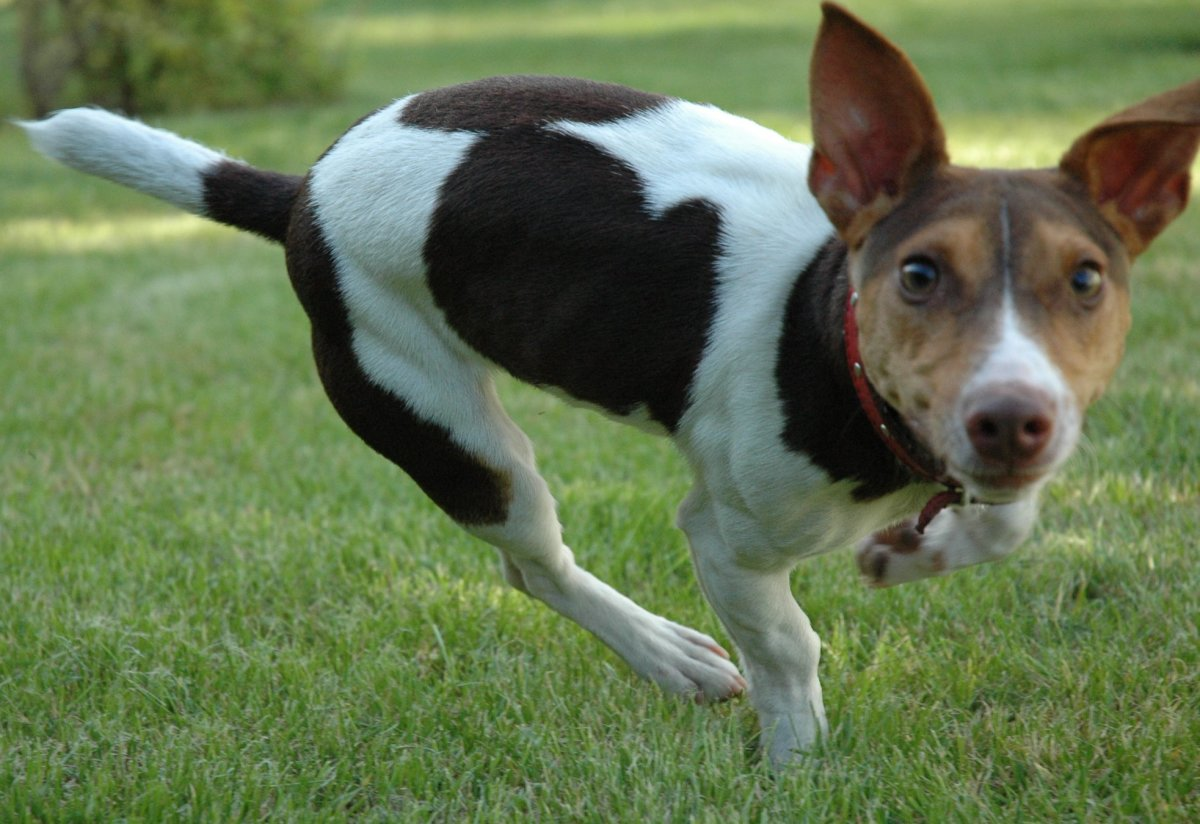 A Pet Rescue Story: Brownie, the Three Legged Dog
