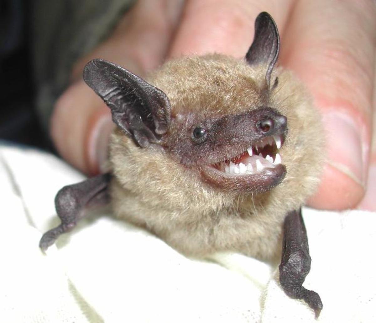 What its like to be a bat - Critical Assessment
