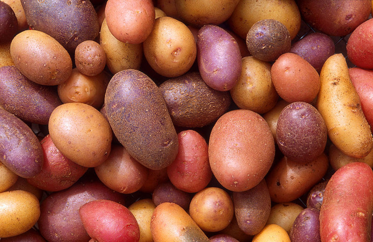 How To Grow Potatoes In A Garbage Can