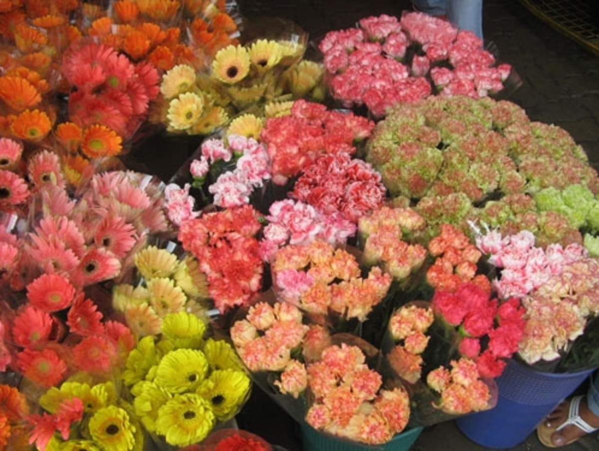 More flowers (Courtesy of http://photos.the-protagonist.net/dangwa-flower-market/)