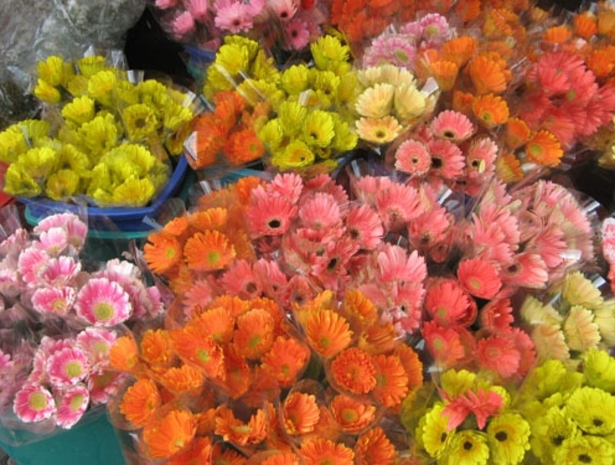 And more flowers (Courtesy of http://photos.the-protagonist.net/dangwa-flower-market/)